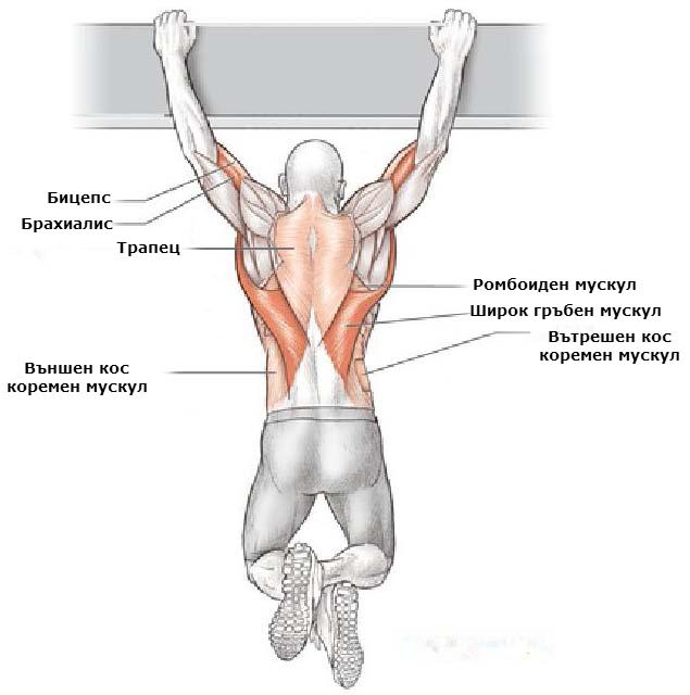 Кои мускули вземат участие при набиране с надхват