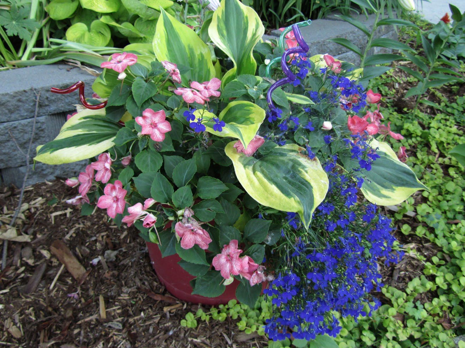 Hosta In Container Gardens Gardening Flower And Vegetables