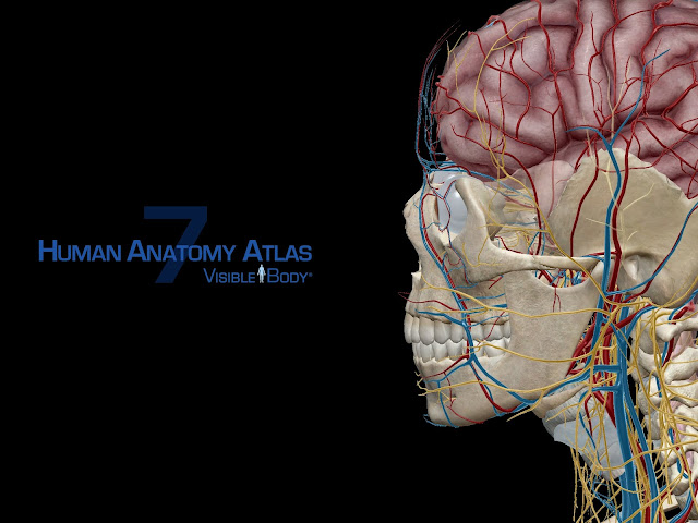 Human Anatomy Atlas 7 de Visible body