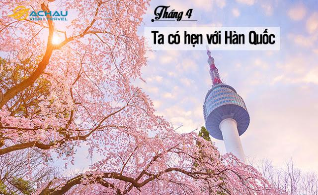 Du lịch Hàn Quốc ngay kẻo lỡ mùa hoa anh đào
