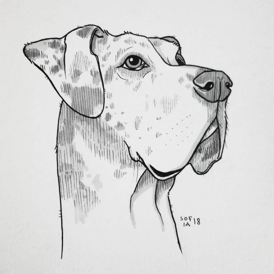 12-The Great Dane-Sofia-Härö-Black-and-White-Ink-Animal-Drawings-www-designstack-co