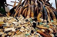China destroys 662 kg of illegal ivory