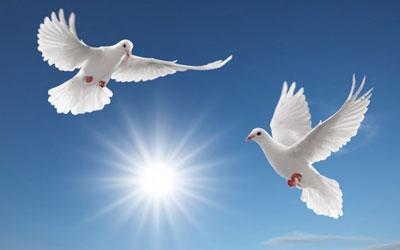 Image result for Giải đáp điềm báo giấc mơ thấy biết bay.