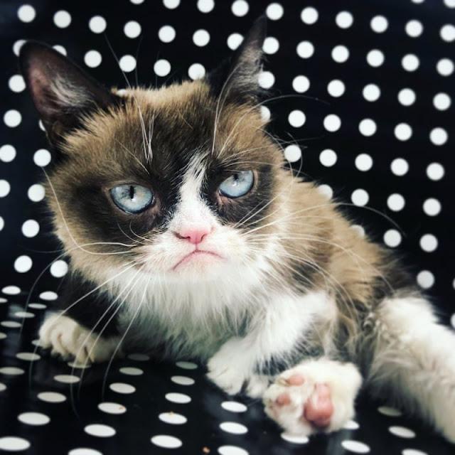 करोड़ों की मालकिन इस बिल्ली की मौत से सोशल मीडिया पर छाया शोक