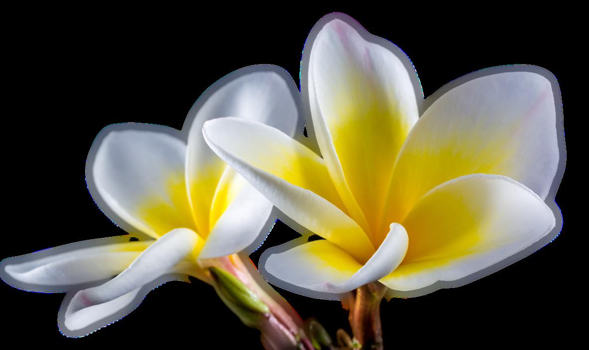 Flores Copo De Leite Hortênsia Hibisco Rosa Margarida