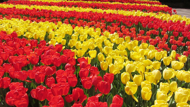 Spring in Netherlands