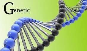 Faktor Genetik