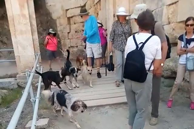 Απαράδεκτες εικόνες: Εισβολή αγέλης αδέσποτων σκύλων στο Αρχαίο Θέατρο Επιδαύρου (βίντεο)