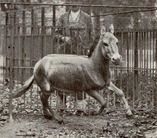 الحيوانات المنقرضة في آخر 100 سنة مع سبب انقراضها