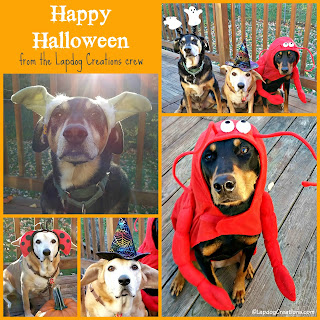3 rescue dogs dressed up for Halloween