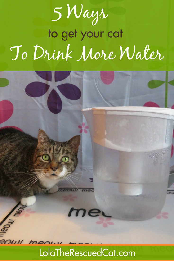 Lola The Rescued Cat: 5 Ways to Get Your Cat to Drink More Water ...
