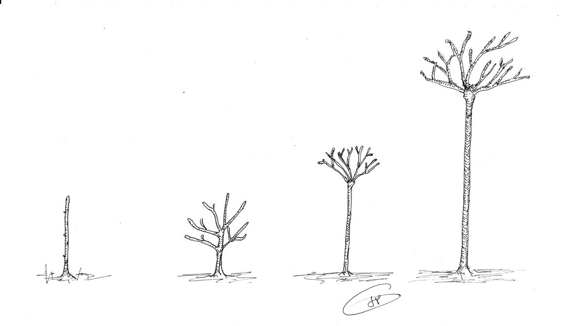 les secrets de la taille et de la greffe des arbres fruitiers bio 01 15 13. Black Bedroom Furniture Sets. Home Design Ideas