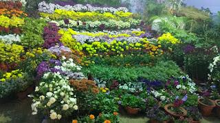 JAMSHEDPUR FLOWER SHOW PHOTO