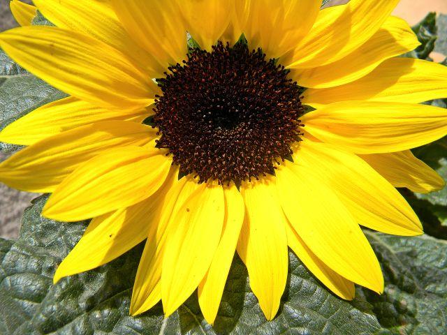 kwiaty w naszym ogrodzie
