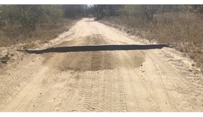 Ular piton raksasa di tengah jalan