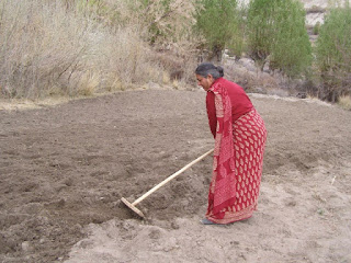 Dr. Vandana Shiva raking the ground on a farm in India Guelph blog