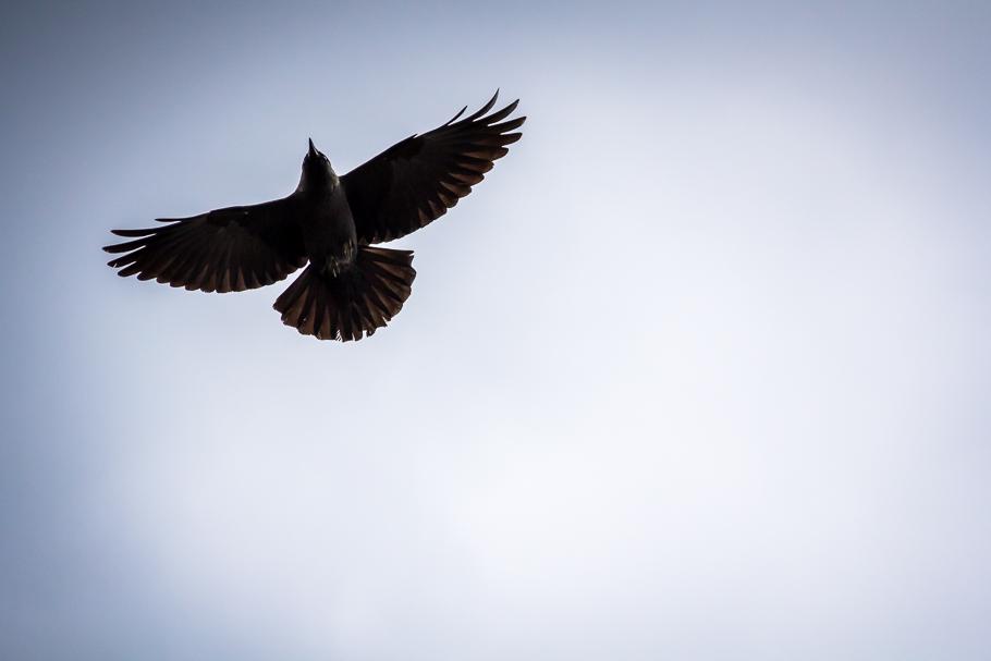 'A crow above me', de Carlos Larios