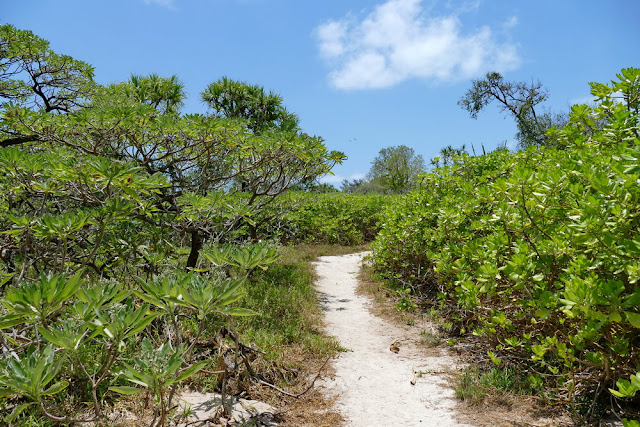 Pfad Natur Heron Island Insel Fussweg Natur Wald Urwald Wildnis
