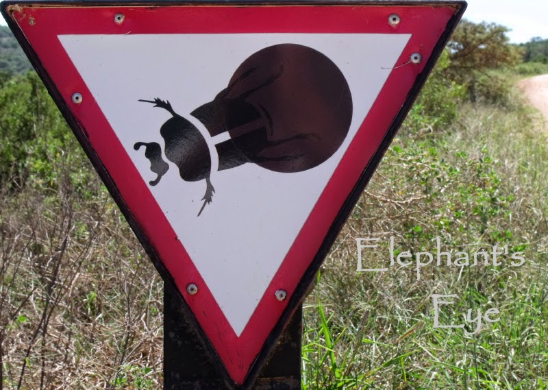 In Addo give way to the dung beetle