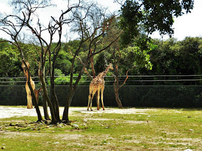 giraffe zoo montpellier gratis
