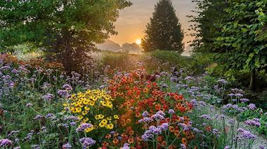 Fotos de jardines premiadas en IGPOTY N.11 Beautiful Gardens