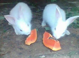 Makanan Kesukaan Kelinci yang Sehat