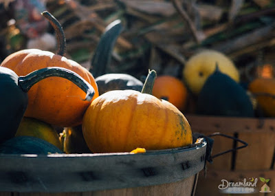 Fall Garden Planting Guide: What to Plant and When
