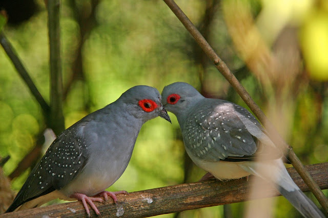 Kiss-Day-Pictures-Images-For-Husbnd