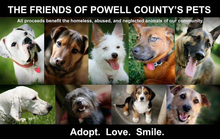 Animals in Shelters Needing Homes