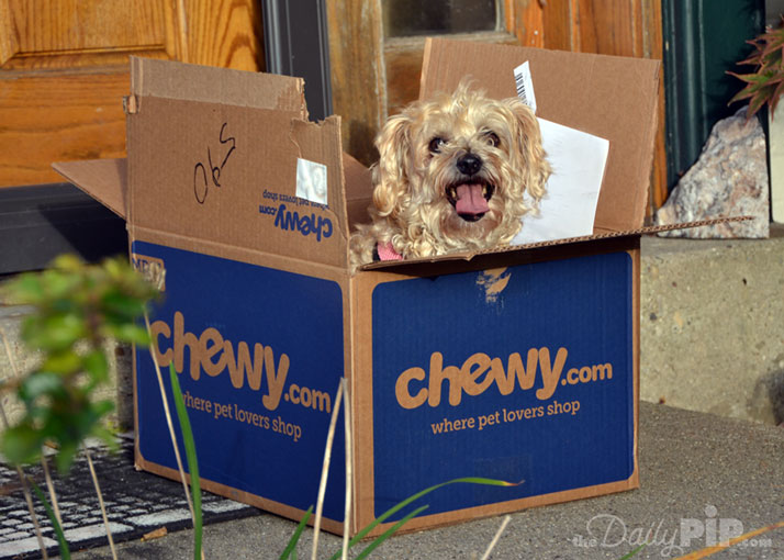Cats aren't the only ones who like boxes - dogs like boxes too