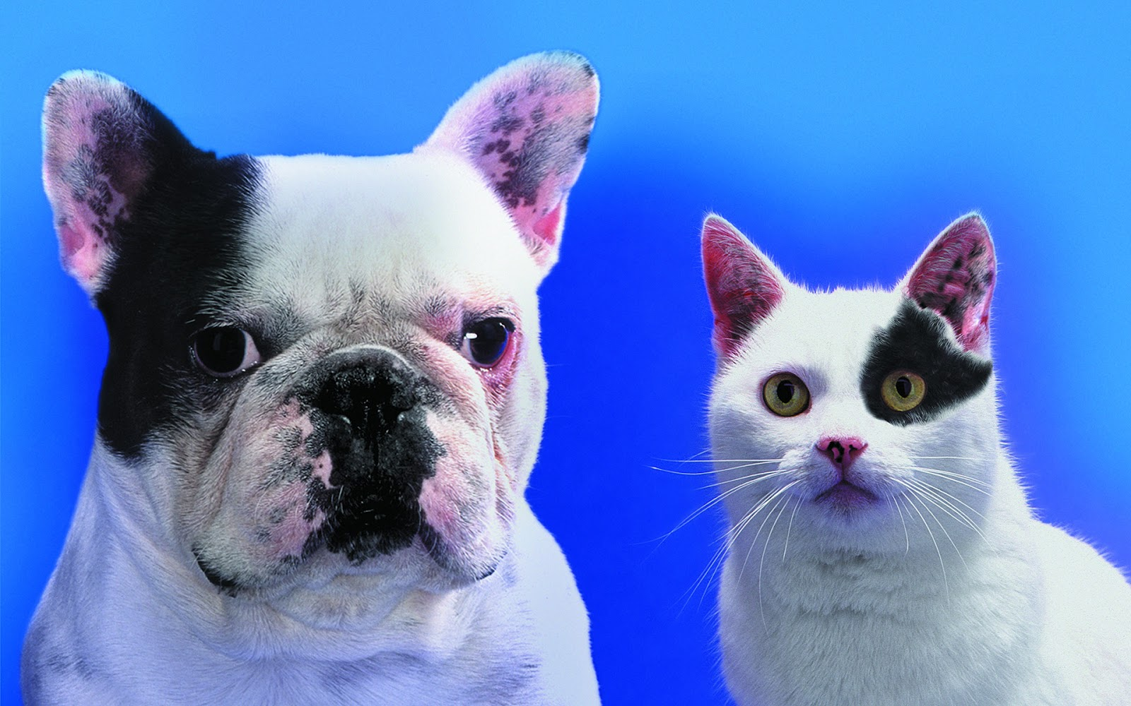 High Resolution Wallpaper: Funny Cats & Dogs Wallpapers