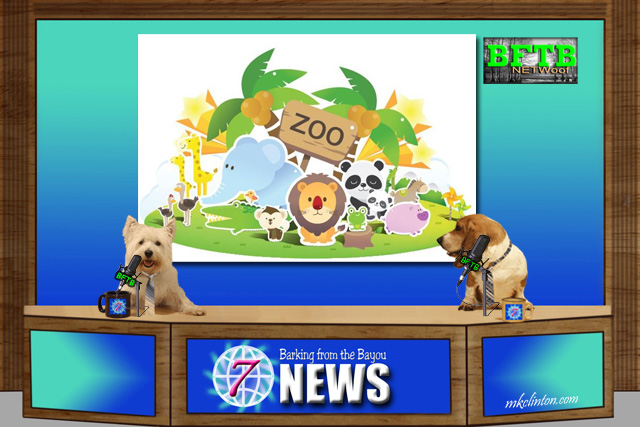BFTB NETWoof Dog News reports on new animals at the Denver Zoo