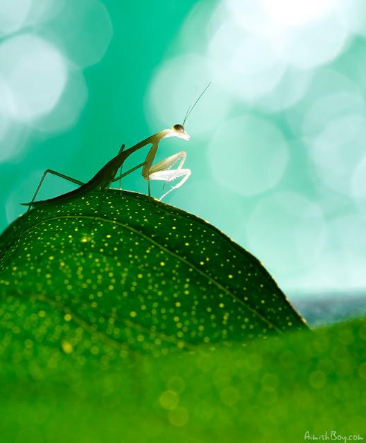 صور بعض الحشرات سبحان الله 6166937436_661383f81