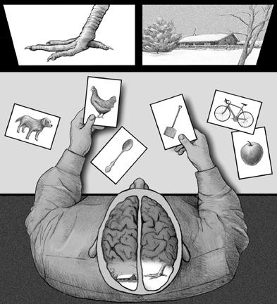split brain research