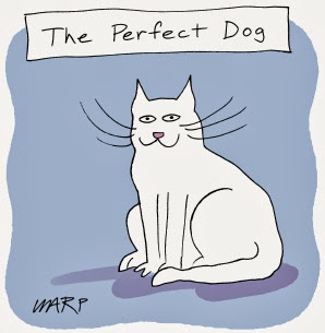 Funny cat perfect dog joke cartoon picture