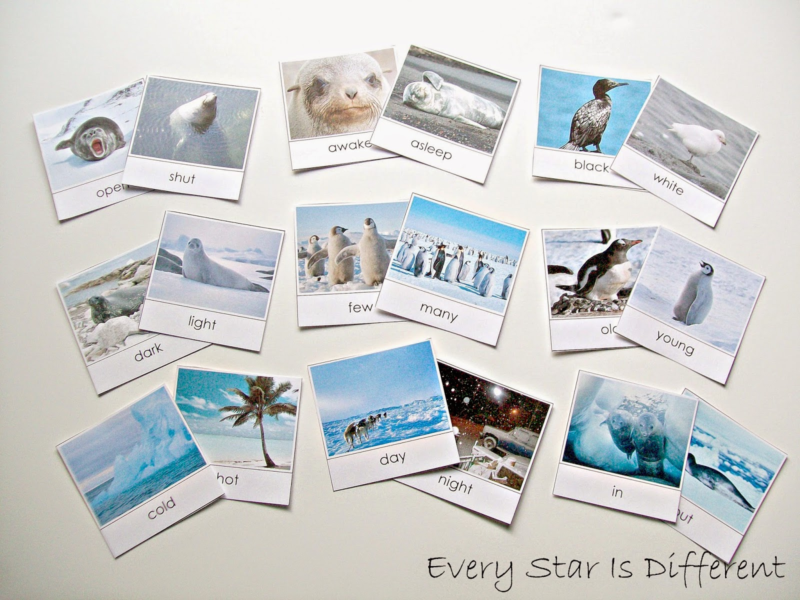 Antarctica Opposite Cards