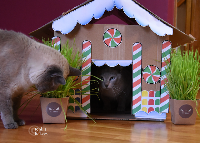 Faraday glares at Maxie from inside the Gingerbread House as he noms on the landscaping.