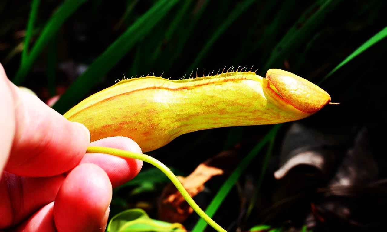 фото цветы похожие на мужские гениталии - 4
