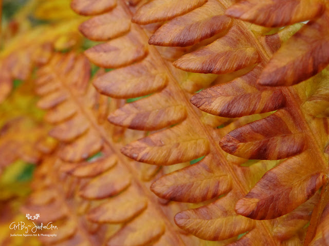 Beautiful Fall Fern Photo