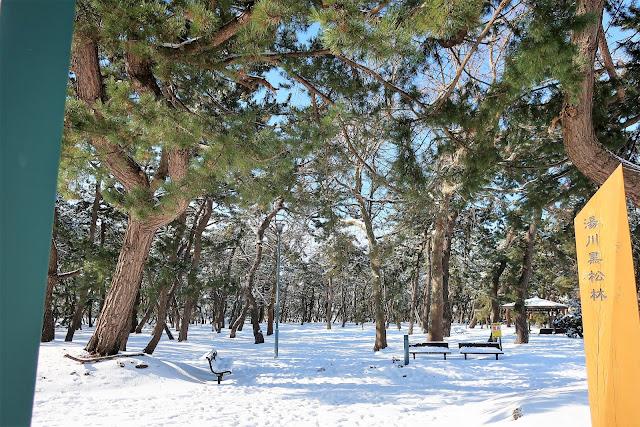 北海道 函館 湯川黒松林