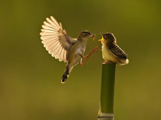 Jangan Mengeluh Tak Punya Pekerjaan Tetap, Burung Saja Terbang Tiap Hari Tanpa Tahu Dimana dapat Makanan