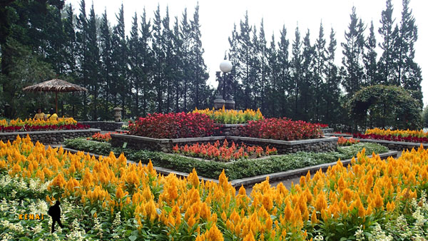 Melrimba Garden - Camping Diantara Hamparan Bunga