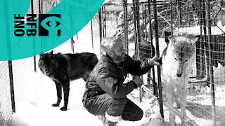 Documental El Llanto de los salvaje Online