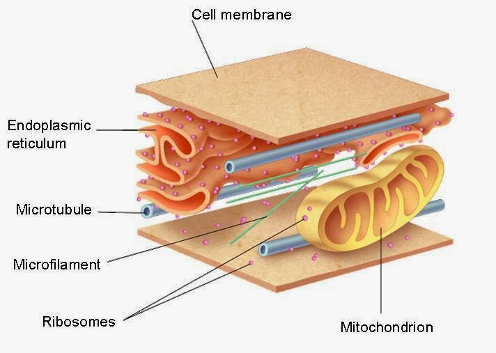 simply cells the neglected cell parts biology cell organelle biology cell organelle biology cell organelle biology cell organelle