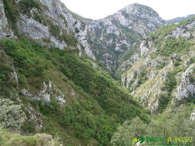 Canal de Reñinuevo: Bosque y Desfiladero