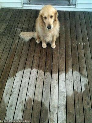 Lustiger Fauler Hund im Regen - witziger Abdruck auf dem Boden