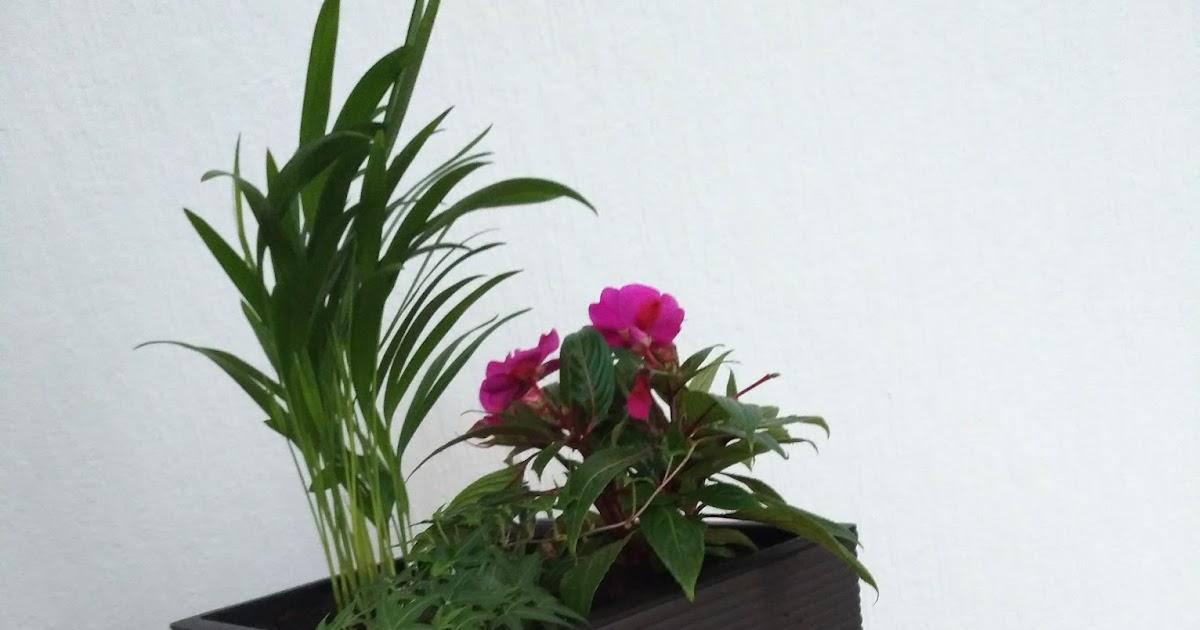 Cocolinchen : Der Casa Cosy Pflanzkübel von EMSA