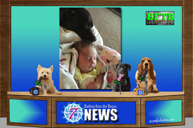 BFTB NETWoof News set with Paisley Lab and new baby on screen