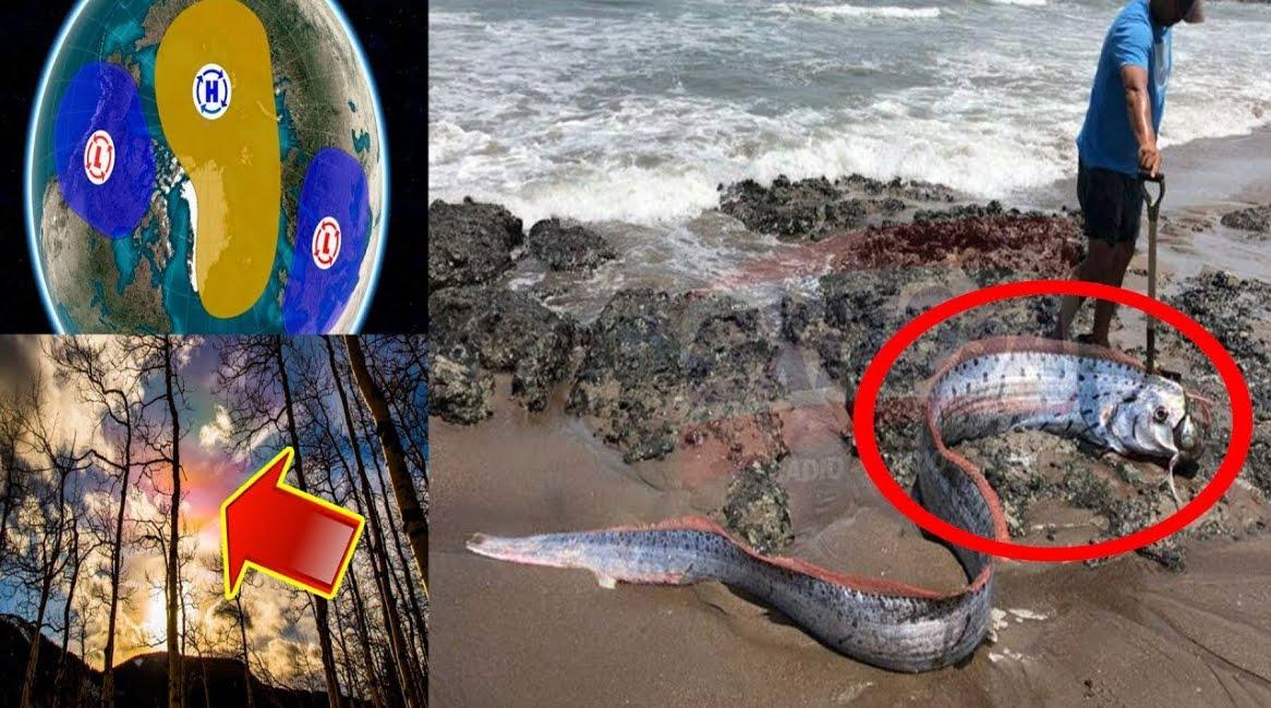 VIDEO YOUTUBE Brutto presagio dei pesci remo morti: atteso Grande Terremoto Tsunami in Giappone.