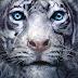 Último livro de A Maldição de Tigre está pronto e já tem data pra ser lançado!